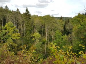 Gloucestershire Wildlife Trust - Chedworth Nature Reserve woodlands